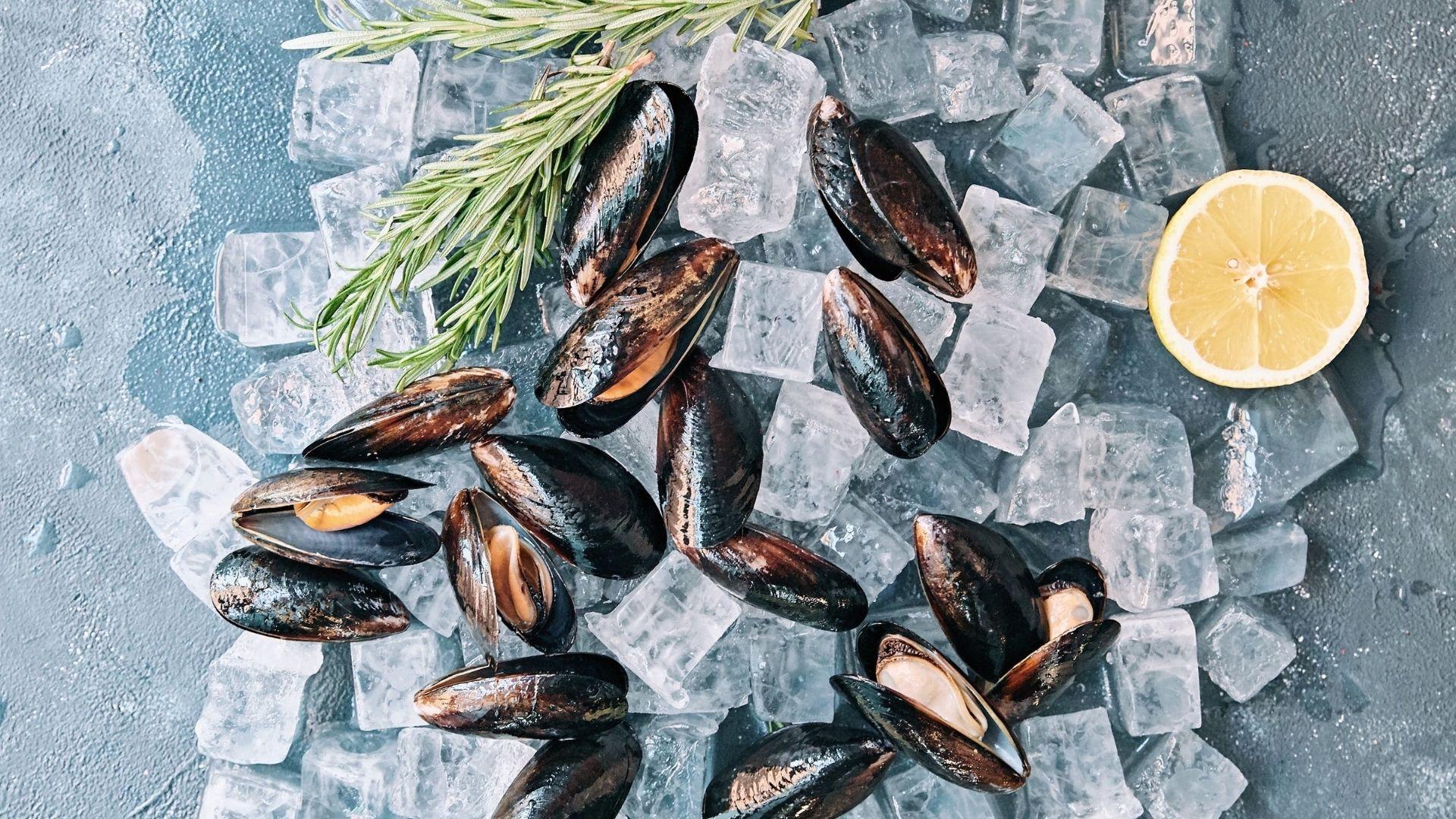 Moules et autres fruits de mer