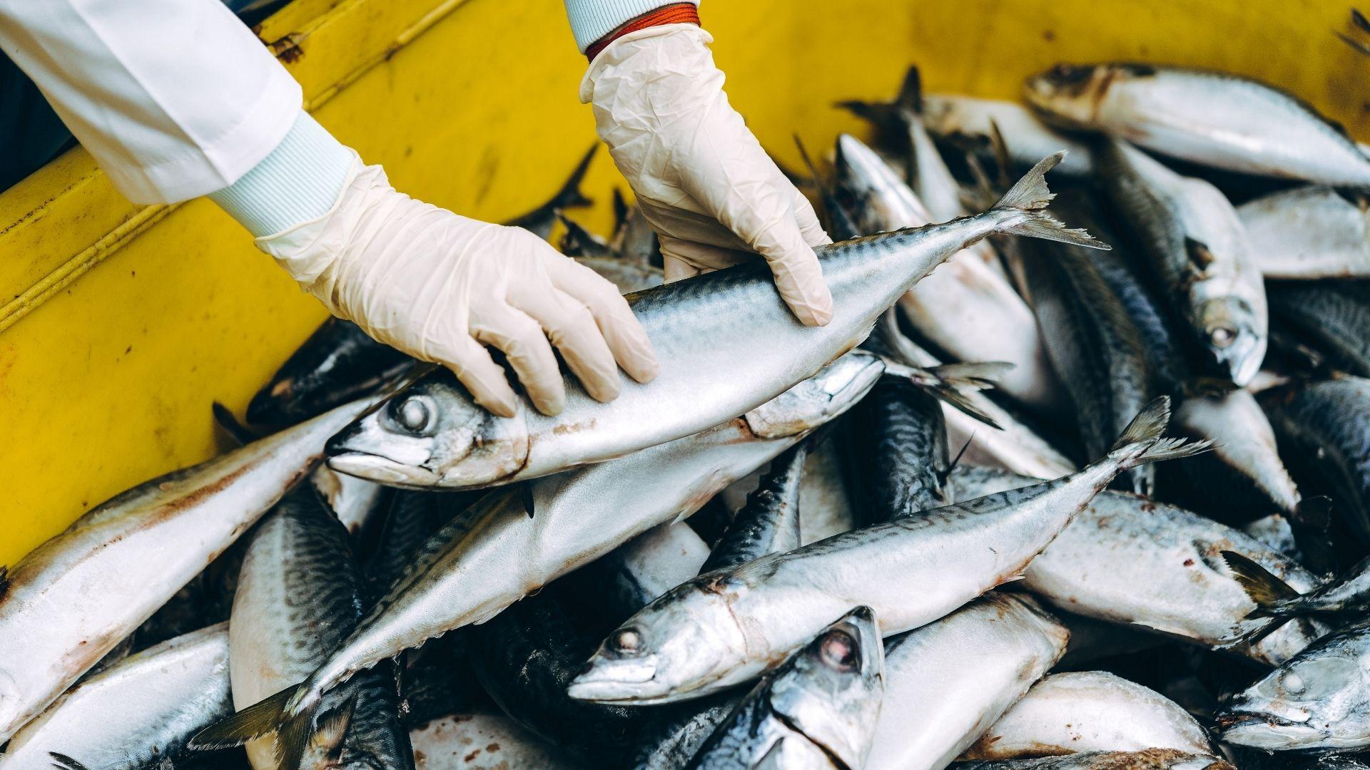 Nos poissons frais