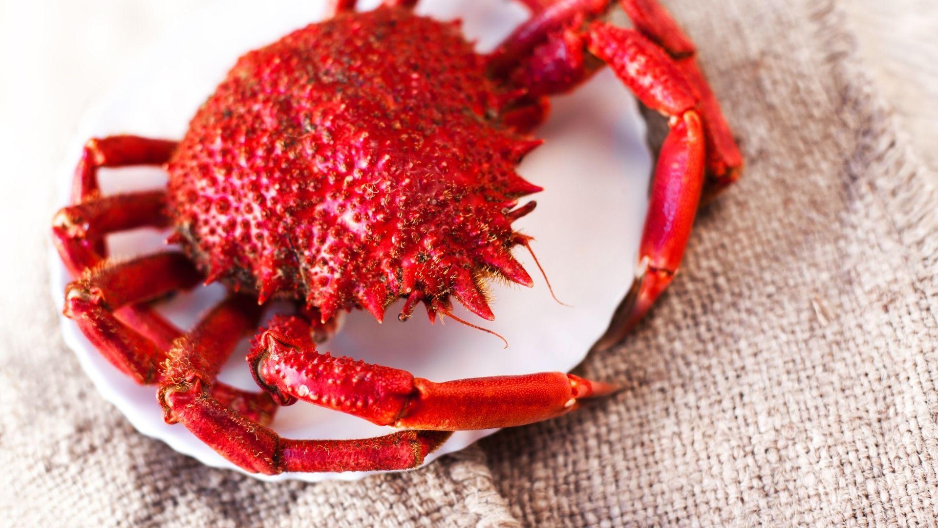 Nos crustacés